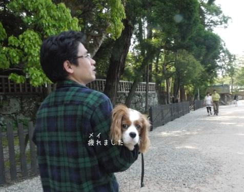 fc2blog_20140607201646397.jpg