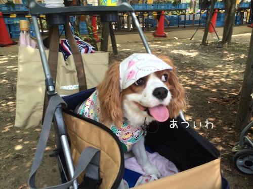 fc2blog_20140627223725408.jpg