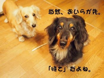 写真1108(№263)1
