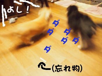 写真1148(№267)1