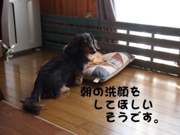 写真1181(№270)1