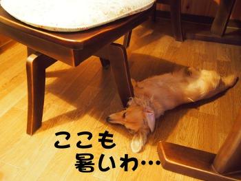 写真1292(№282)1