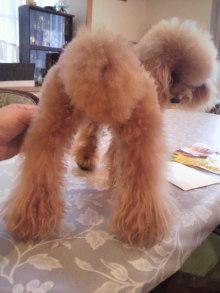 愛犬鈴ちゃんのライフスタイルブログ-2010092716320000.jpg