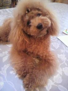 愛犬鈴ちゃんのライフスタイルブログ-2010092716350002.jpg