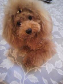 愛犬鈴ちゃんのライフスタイルブログ-2010092716360000.jpg