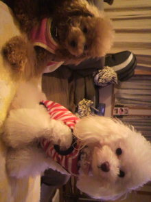 愛犬鈴ちゃんのライフスタイルブログ-2010082120400002.jpg