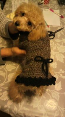 愛犬鈴ちゃんのライフスタイルブログ-2009122723210000.jpg