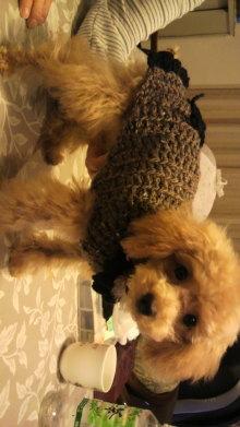 愛犬鈴ちゃんのライフスタイルブログ-2009122723210001.jpg