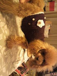 愛犬鈴ちゃんのライフスタイルブログ-2010092723520001.jpg