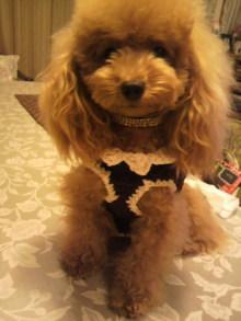 愛犬鈴ちゃんのライフスタイルブログ-2010092723530000.jpg