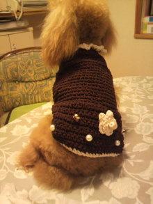 愛犬鈴ちゃんのライフスタイルブログ-2010092723530001.jpg