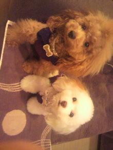 愛犬鈴ちゃんのライフスタイルブログ-2010102520020001.jpg