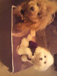 愛犬鈴ちゃんのライフスタイルブログ-2010102520020000.jpg