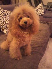 愛犬鈴ちゃんのライフスタイルブログ-2010103117050002.jpg