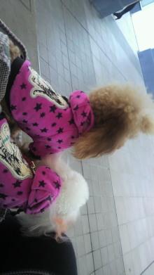 愛犬鈴ちゃんのライフスタイルブログ-2010110114400001.jpg