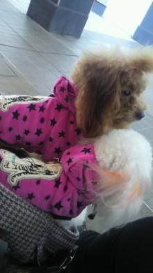 愛犬鈴ちゃんのライフスタイルブログ-2010110114400000.jpg