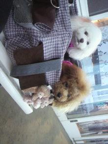 愛犬鈴ちゃんのライフスタイルブログ-2010110114380001.jpg