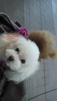 愛犬鈴ちゃんのライフスタイルブログ-2010110114370000.jpg