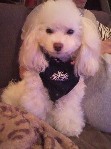 愛犬鈴ちゃんのライフスタイルブログ-2010112123490000.jpg