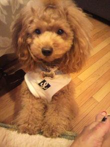 愛犬鈴ちゃんのライフスタイルブログ-2010110816140000.jpg