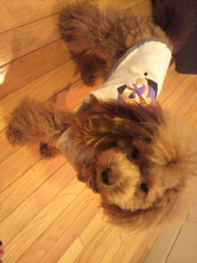 愛犬鈴ちゃんのライフスタイルブログ-2010110816110002.jpg