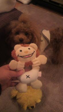 愛犬鈴ちゃんのライフスタイルブログ-2010112321110000.jpg