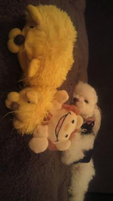 愛犬鈴ちゃんのライフスタイルブログ-2010112321120000.jpg