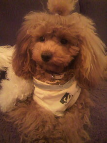 愛犬鈴ちゃんのライフスタイルブログ-2010112321210002.jpg