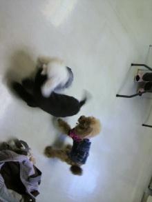 愛犬鈴ちゃんのライフスタイルブログ-2010112610500000.jpg