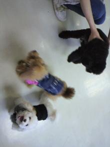愛犬鈴ちゃんのライフスタイルブログ-2010112610550001.jpg