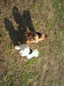 愛犬鈴ちゃんのライフスタイルブログ-2010112711480000.jpg
