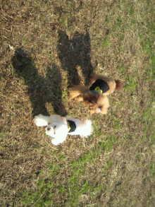 愛犬鈴ちゃんのライフスタイルブログ-2010112711480001.jpg