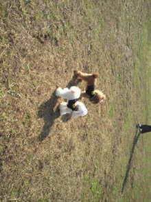 愛犬鈴ちゃんのライフスタイルブログ-2010112711490000.jpg