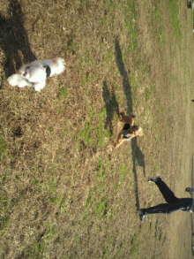 愛犬鈴ちゃんのライフスタイルブログ-2010112711500000.jpg