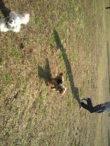 愛犬鈴ちゃんのライフスタイルブログ-2010112711500001.jpg