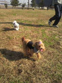 愛犬鈴ちゃんのライフスタイルブログ-2010112711520003.jpg