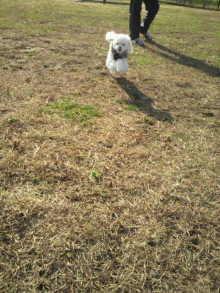 愛犬鈴ちゃんのライフスタイルブログ-2010112711520000.jpg