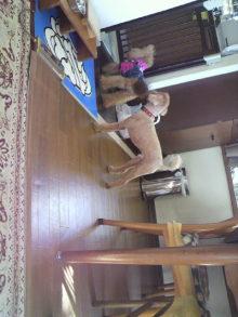愛犬鈴ちゃんのライフスタイルブログ-2010111812300001.jpg