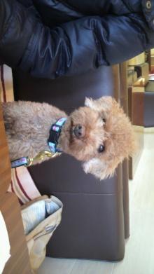 愛犬鈴ちゃんのライフスタイルブログ-2010122812190000.jpg