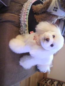 愛犬鈴ちゃんのライフスタイルブログ-2010122815370000.jpg