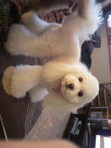 愛犬鈴ちゃんのライフスタイルブログ-2010122815390000.jpg