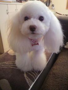 愛犬鈴ちゃんのライフスタイルブログ-2010122815370001.jpg