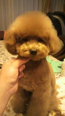 愛犬鈴ちゃんのライフスタイルブログ-2010122816540000.jpg