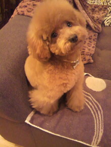 愛犬鈴ちゃんのライフスタイルブログ-2010122817100003.jpg