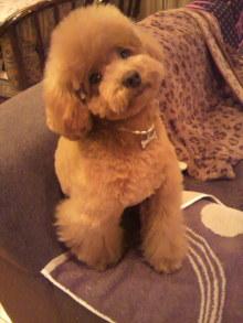 愛犬鈴ちゃんのライフスタイルブログ-2010122817110000.jpg
