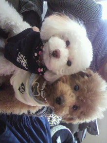 愛犬鈴ちゃんのライフスタイルブログ-2011010108560001.jpg