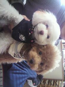 愛犬鈴ちゃんのライフスタイルブログ-2011010108560000.jpg