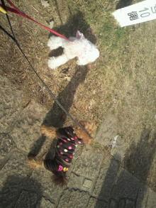 愛犬鈴ちゃんのライフスタイルブログ-2011010110400000.jpg