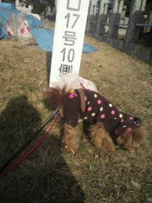愛犬鈴ちゃんのライフスタイルブログ-2011010110400001.jpg