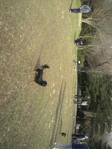 愛犬鈴ちゃんのライフスタイルブログ-2011010314150000.jpg